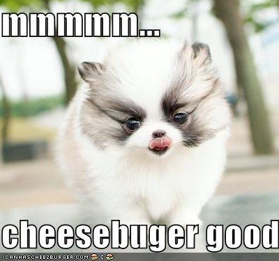 Cheezburger Image 3878862848