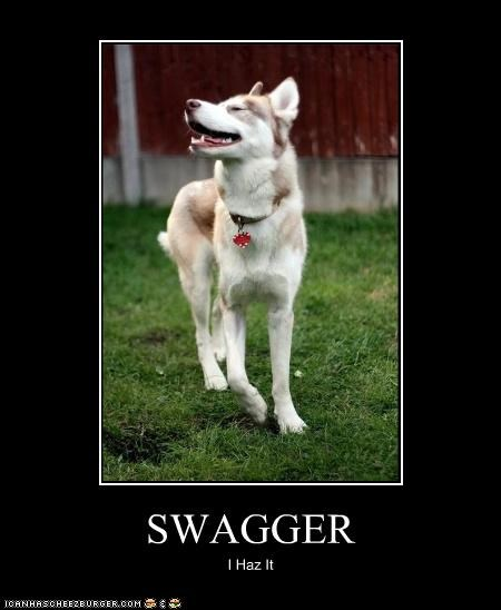 haz it husky mixed breed style swagger - 3878881024