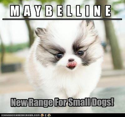 M A Y B E L L I N E ___________________________________________ New Range For Small Dogs!