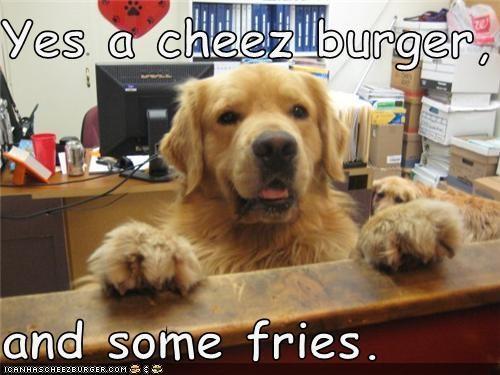 Cheezburger Image 3879704576