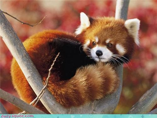 cute nerd jokes red panda - 3879919360