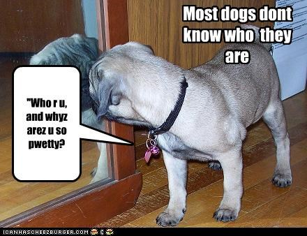 Most dogs dont know who they are ''Who r u, and whyz arez u so pwetty?