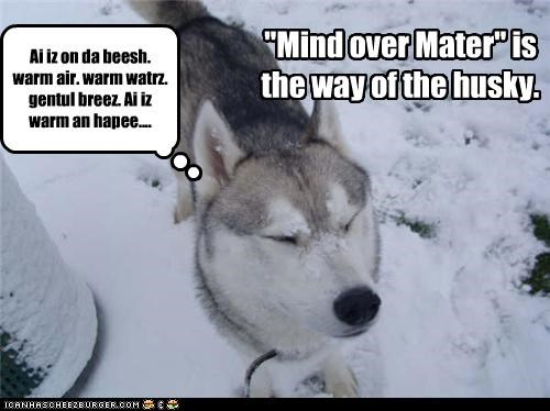 beach,cold,dreaming,husky,mind over matter,snow,warmth