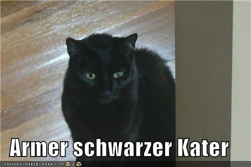 Armer Schwarzer Kater Cheezburger Funny Memes Funny Pictures