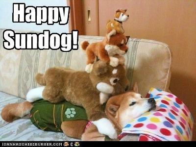 dog pile happy sundog shiba inu squished stuffed animals - 3880774912