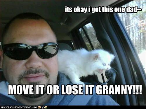 caption,dad,driving,granny,i got this,kitten,move it or lose it,screaming