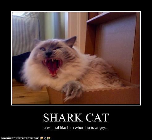 SHARK CAT u will not like him when he is angry...