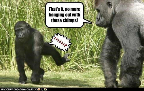 That's it, no more hanging out with those chimps! } r r r r-i-i-P