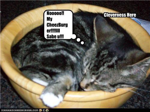 Cleverness Here Nooooo!! My CheezBurger!!!!Ill Sabe u!!!