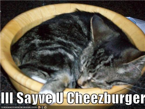 Cheezburger Image 3882219520