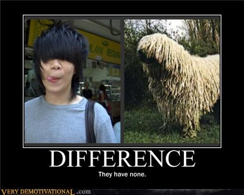 hair difference none dogs - 3882457088