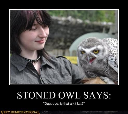"STONED OWL SAYS: ""Duuuude, is that a kit kat?"""