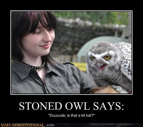 stoned Owl bird drug stuff - 3882758656