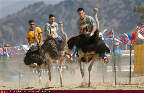 crazy,dangerous,ostrich,race