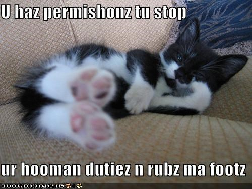caption feet human duties kitten permission rub - 3882929152