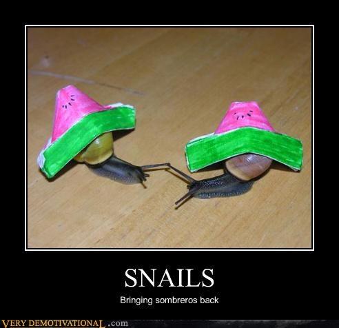 sombrero wtf snail hat - 3883320832