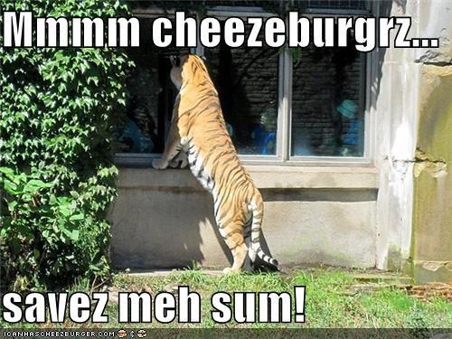 Cheezburger Image 3883688448