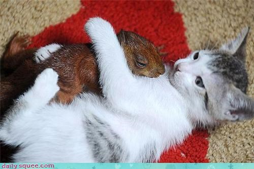kitten,squirrel