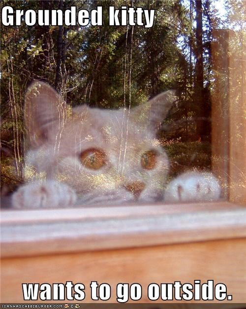 caption go outside grounded kitty Staring wanting window - 3884419072