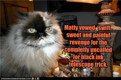 angry black caption captioned cat ink persian promise revenge Telescope trick upset vow vowing - 3884456704
