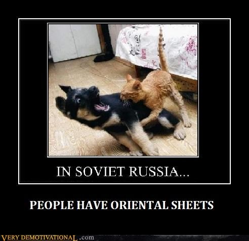 cat sheets dogs Soviet Russia