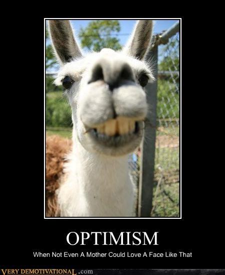 llama wtf optimism ugly - 3884788224