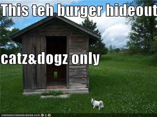 Cheezburger Image 3884829696