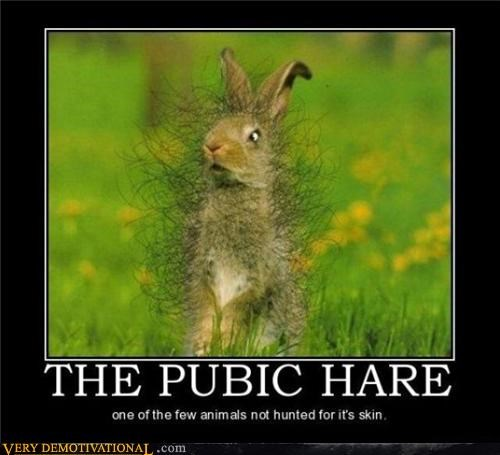 hair hare pubic rabbit - 3885002240