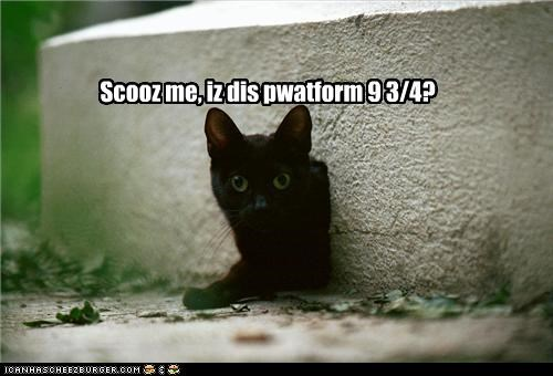 caption cat excuse me Harry Potter platform-9-34 question - 3885031936
