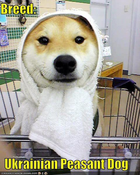 fake breed,new breed,peasant,scarf,shiba inu,shopping cart,towel,ukrainian
