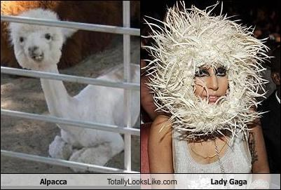 alpaca lady gaga - 3885314560