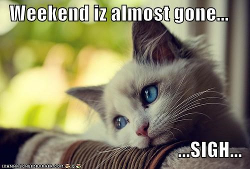almost over,caption,cat,Sad,sigh,weekend