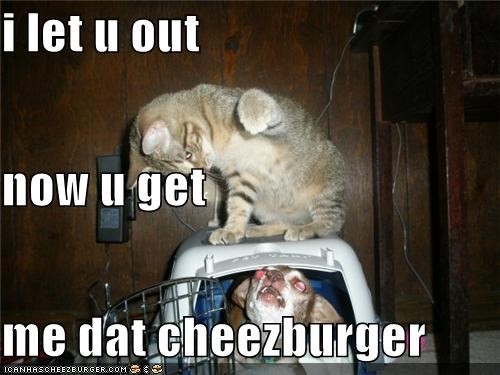 Cheezburger Image 3886396928