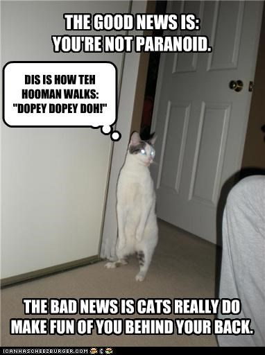 bad news,caption,cat,good news,hooman,mocking,paranoia,walking