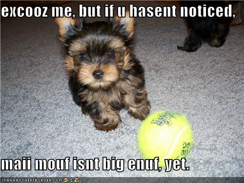 ball,FAIL,fetch,give it time,mixed breed,mouth,not grown,small,terrier