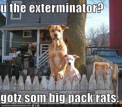 exterminator,pack rats,pitbulls,pun,puppy