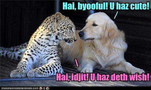 Hai, byooful! U haz cute! / Hai, idjit! U haz deth wish! \