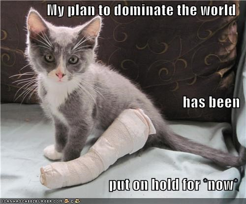broken leg,caption,captioned,cast,delayed,kitten,plans,world domination