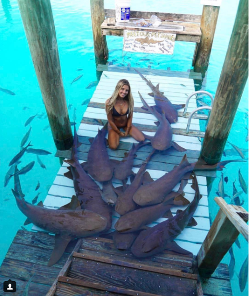 students takes photos with animals around the world