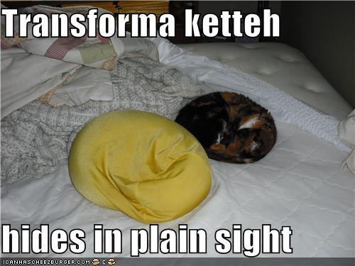 caption cat hiding kitteh - 3889264128