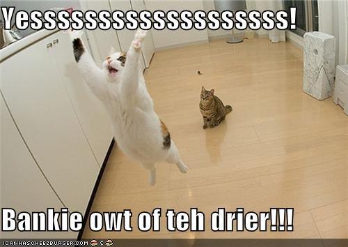 blanket caption cat done drier excitement laundry yesssssss - 3889557760