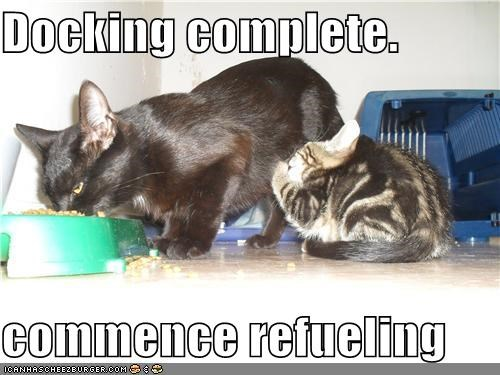 caption cat complete docking kitten refueling - 3889712640