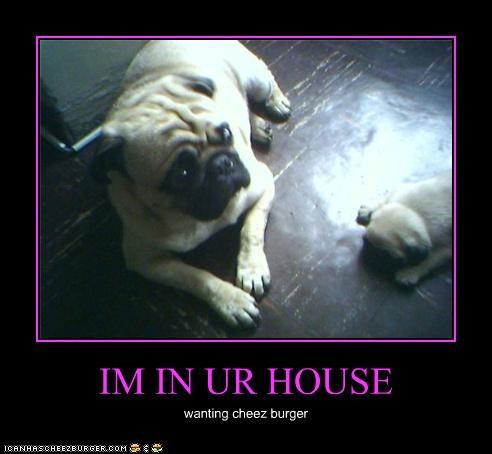 Cheezburger Image 3890608640