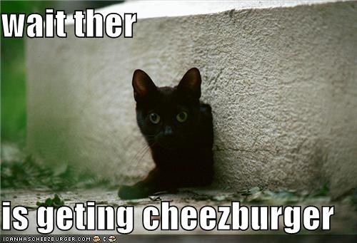 Cheezburger Image 3891240704