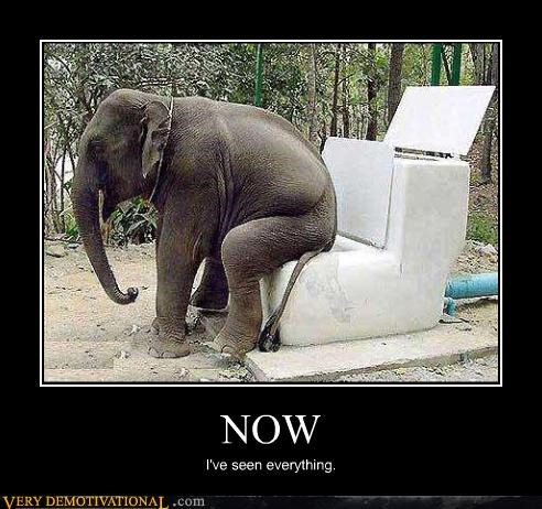 wtf elephant now toilet