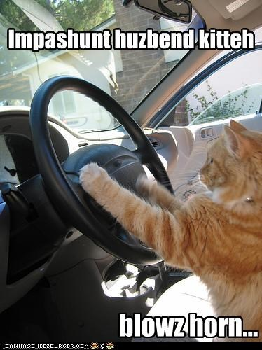 blowing,caption,car,driving,horn,husband kitteh,impatient