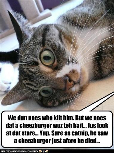 Cheezburger Image 3892339968