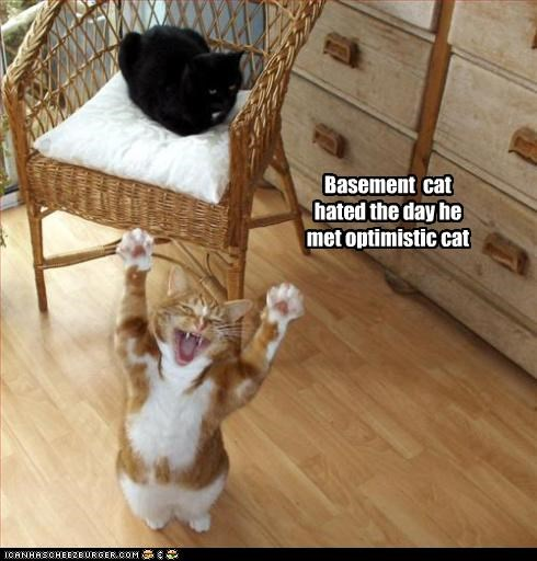 basement cat caption hate meeting optimistic cat regret - 3892418560