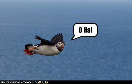 bird caption flying o hai puffin - 3892631040