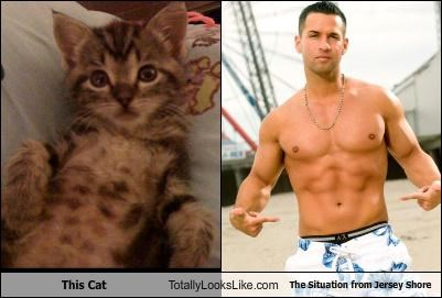 jersey shore the situation this cat - 3892911104